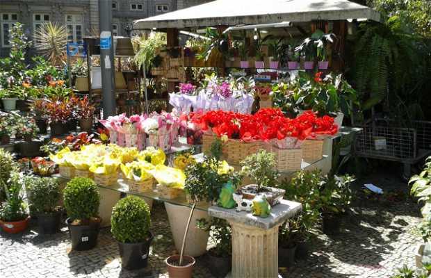 Largo Das Flores