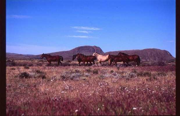 Sierra Baguales