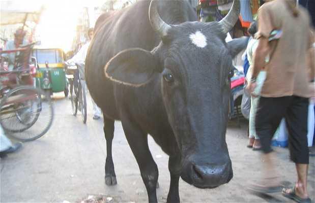 Pahar Ganj
