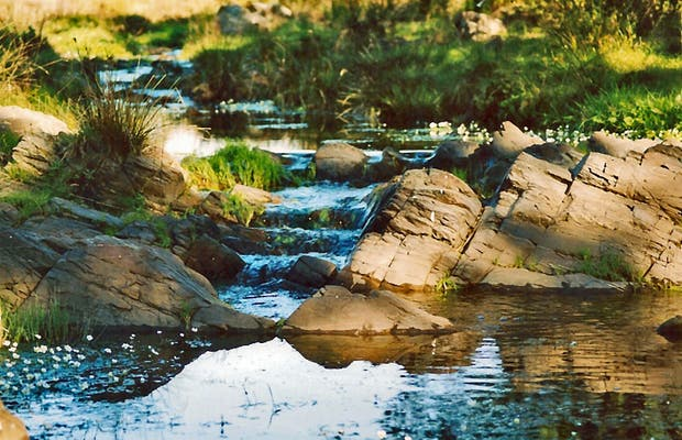 Pedraza Stream