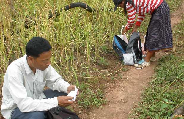 Nam Tha Trekking