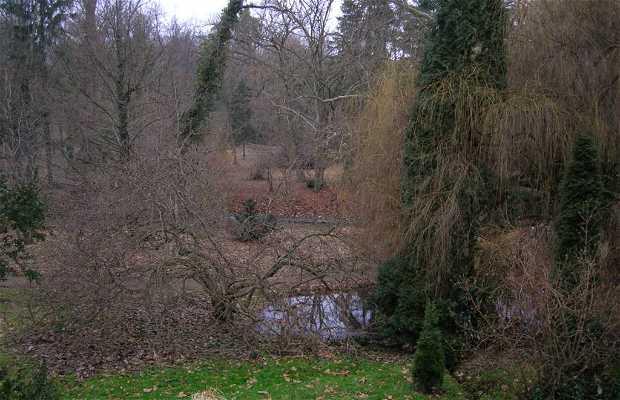 Rezervaţia Naturală Arboretum Simeria