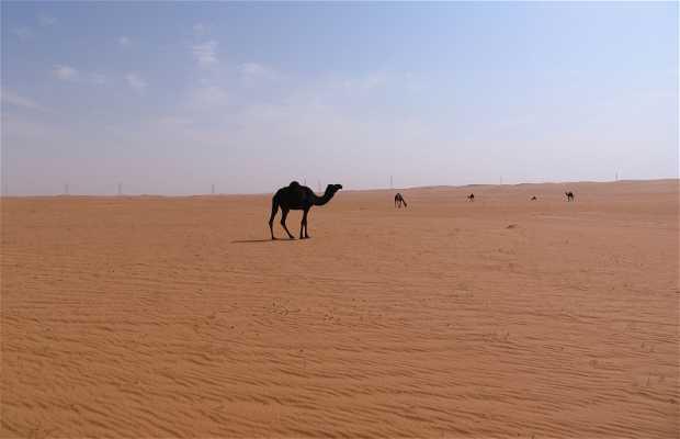 Desierto de Arabia Saudi