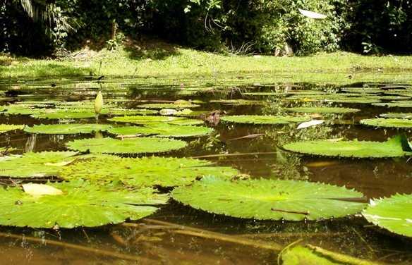 Jardín Botánico Lancetilla