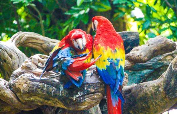 Criadero de fauna de Quintana Roo