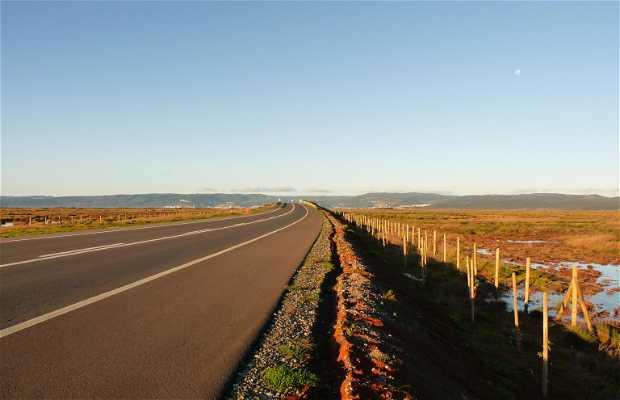 Ruta Interportuaria