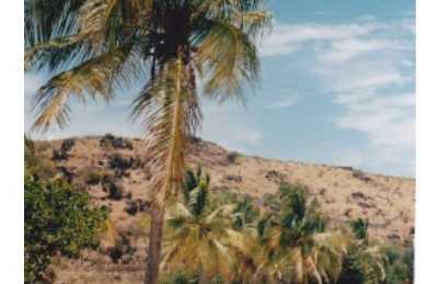 vegetación de San Martín