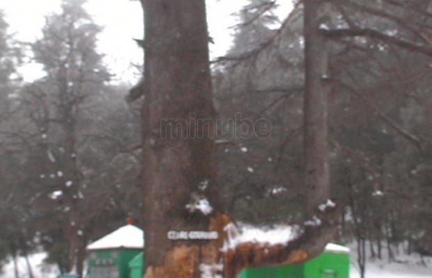 Bosque de Ifrane