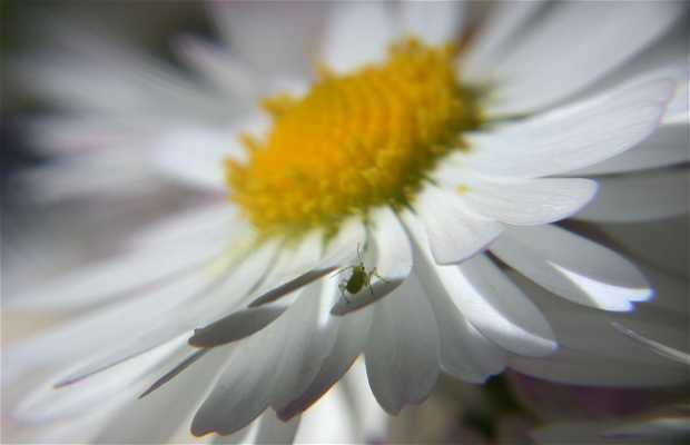 Sur une fleur