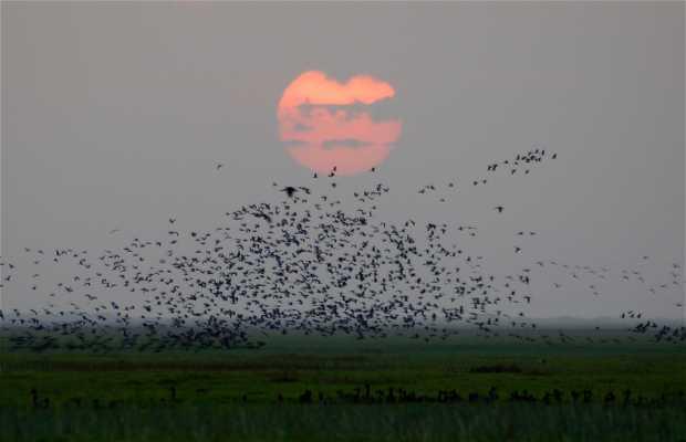 Safari nocturno en Los Llanos