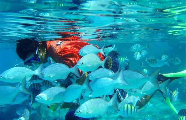Ilha de Cozumel