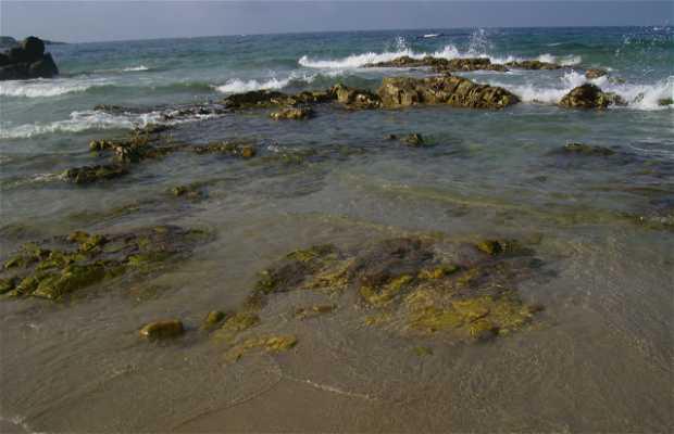 Beach Arealonga
