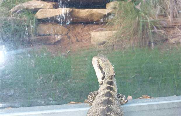 Zoo de Rockhampton