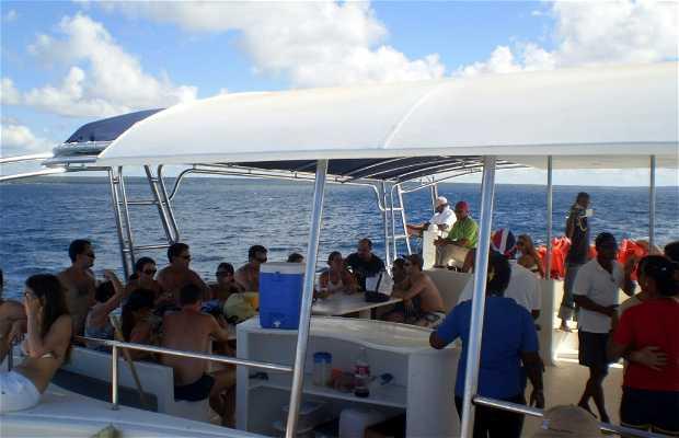 Excursión en Catamarán a Isla Catalina