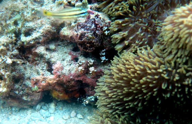 Helicopter Island Reef