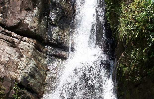 La Fôret nationale El Yunque