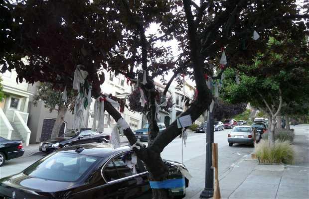Árbol de los deseos de San Francisco