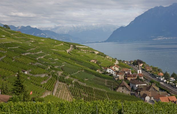 Vineyards of Lake Leman