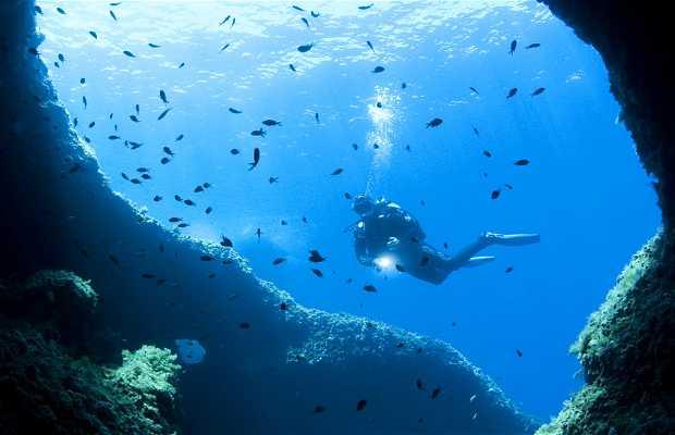 Salgar diving