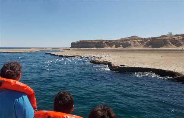 Paseo en Barco por Península de Valdés