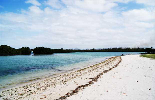 Beach Bras Eau