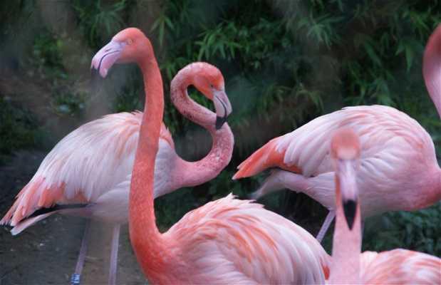 Besançon Zoo