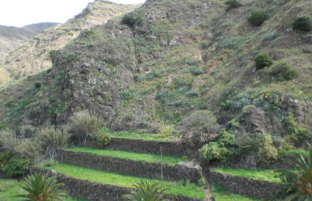 Crops on Terraces