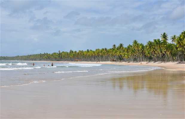 Praia da Coeira
