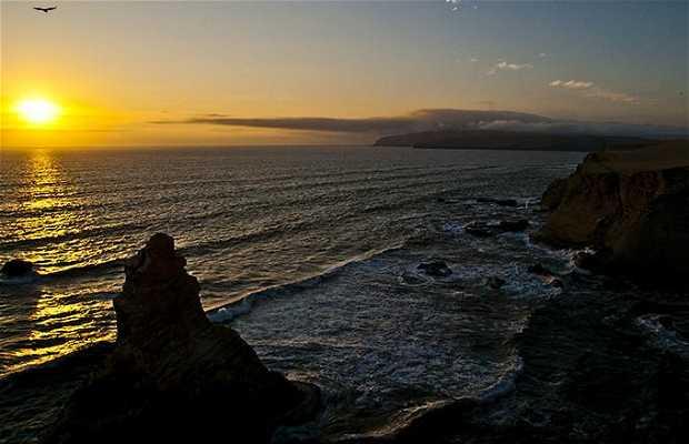 Riserva nazionale di Paracas