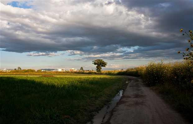 Campos de San Andrés Cholula