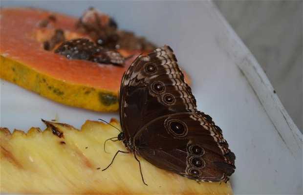 La fattoria delle farfalle
