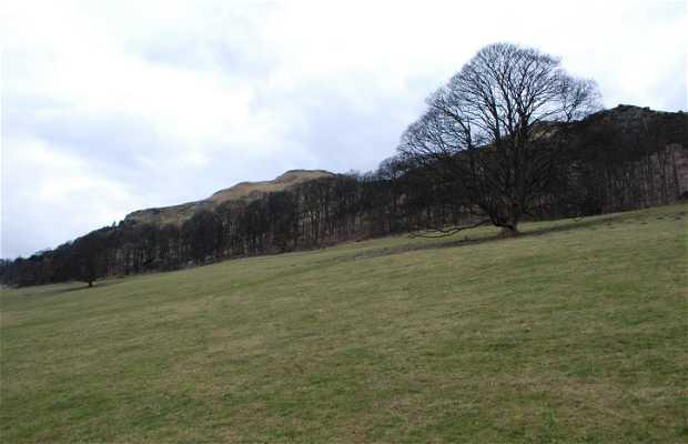 Blairlogie Meadows