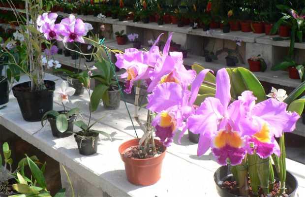 Collection d'orchidées de Xcaret
