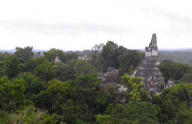 Jungla de Tikal