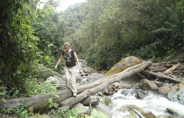 Jungle Cocora
