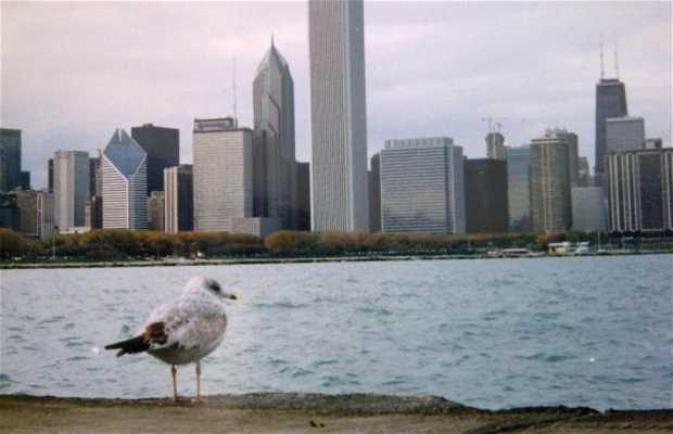 Las playas de Chicago