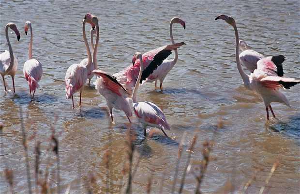 Parque Ornitológico Pont de Gau