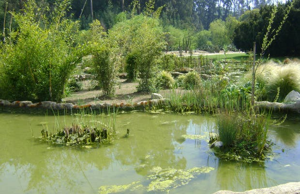 Jard n bot nico nacional en vi a del mar 5 opiniones y 16 for Jardin botanico vina
