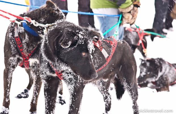 Beargrease Dog Sled Race