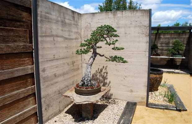 Musée du Bonsai