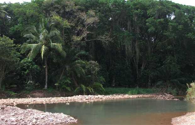 Parque Nacional de Marino Ballena