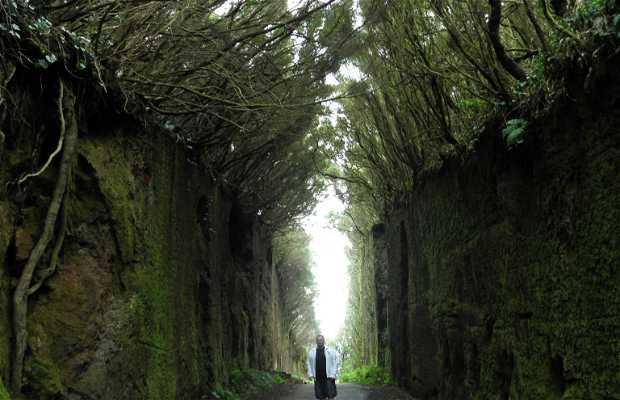 Camino viejo al Pico del Inglés