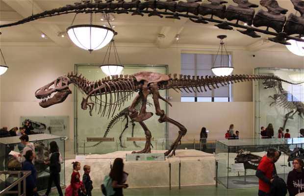 Musée Américain d'Histoire Naturelle