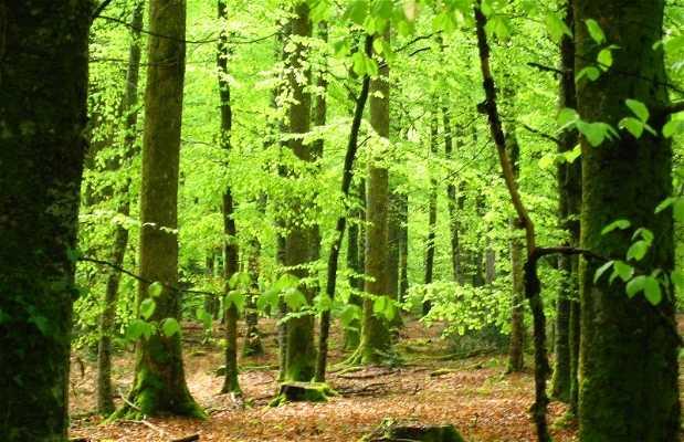 Bosques de Creuse