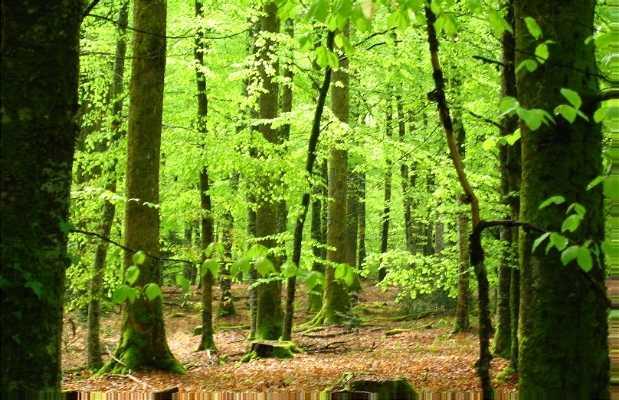 Les forêts de la Creuse