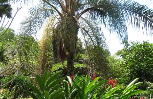 Jardín du Roi