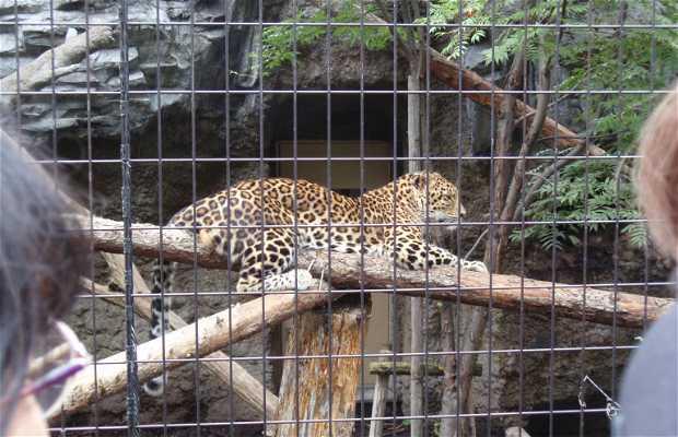 Zoológico Asahiyama