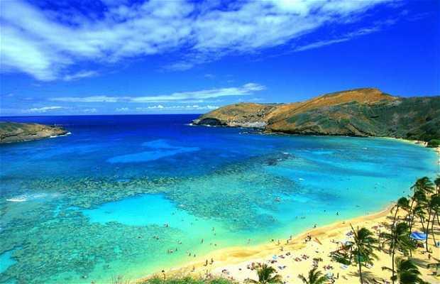 Village global d'Hawaii