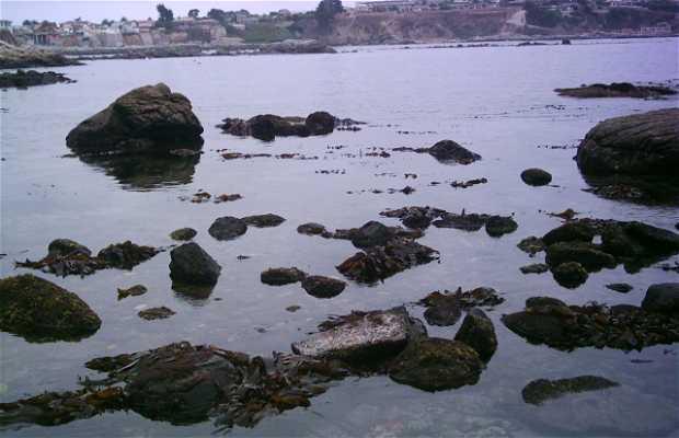 The Papagallo Beach