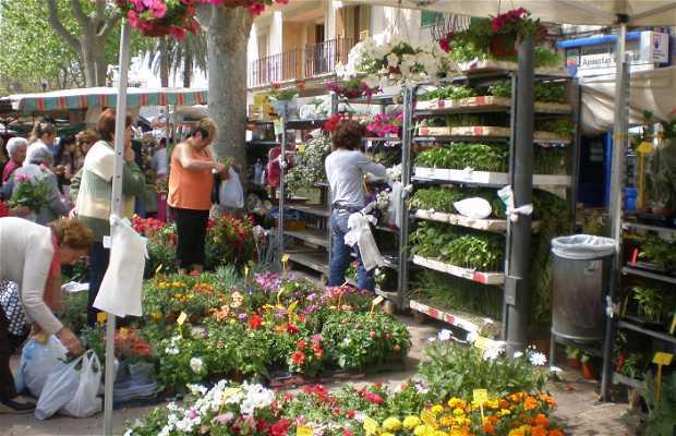 Mercado de Alcudia